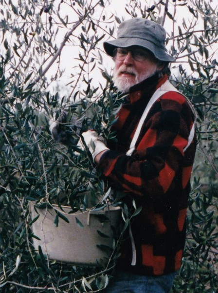 The late John Kramer, picking olives at DaVero's annual olive harvest, sometime in the early 2000s.