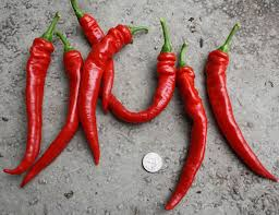 Jimmy Nardello Peppers are rich, sweet and mild.